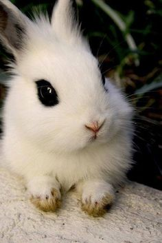 Cutest little rabbit