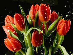 Decent Image Scraps: Tulips Animation  ♥✿⊱♥FLORES ♥✿⊱♥