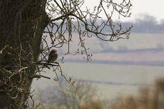 Little Owl Little Owl, Nature Photos, Creatures, Birds, Explore, Photography, Image, Photograph, Fotografie