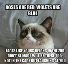 roses are red violets are blue, faces like yours belong in the zoo