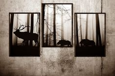 Rám, rámy, rámečky na fotografie, na zrcadla, obrazy, ale třeba i na puzzle | SKLOMAT Oversized Mirror, Moose Art, Puzzle, Animals, Forests, Picture Frame, Image, Puzzles, Animales