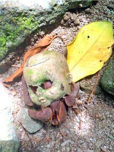 Картинки по запросу Краб с головой куклы