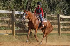 Improve your aids and support your horse through upward and downward transitions!