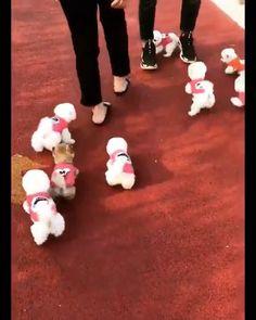 Wtf così carino - So niedlich - cagne Funny Animal Videos, Cute Funny Animals, Cute Baby Animals, Funny Dogs, Animals And Pets, Cute Baby Dogs, Cute Puppies, Dogs And Puppies, Cute Babies