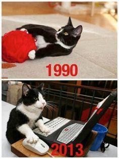 I gatti di oggi non si divertono come una volta…