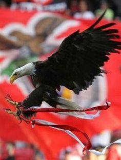 Vitória – a mascote do Benfica Wings Like Eagles, Bald Eagle, Sky, Queen, Bird, American, Pretty, Sports, Animals