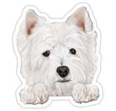 Oscar Sticker Cockapoo Dog, Goldendoodle, Animal Shelter, Animal Rescue, White Terrier, Lab Puppies, White Dogs, Westies, Dog Mom