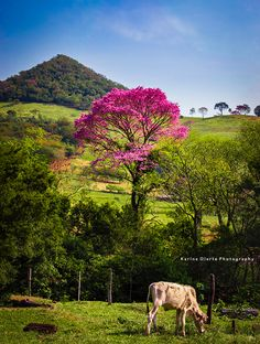 Vinales, Folklore, Mountains, Country, Plants, Blog, Beautiful, Flowering Trees, Beautiful Landscapes
