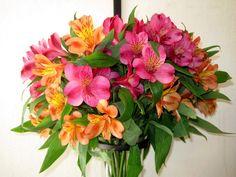 #1873271, flower category - free desktop wallpaper downloads flower