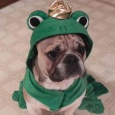 Frog Frenchie