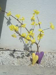 Resultado de imagem para flores de ipe papel crepom