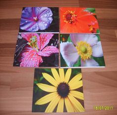 Handmade Greeting Card gift idea by Ellie Girling found on MyOwnCreation: A selection of 10 greetings cards with envelopes (2 of each design) professionally printed on quality card, using my photographs taken on a recent school trip to Kew Gardens. Blank inside for your own message.