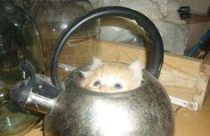 gatos_escondidos_29
