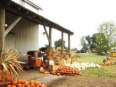 Oakes Farm Pumpkin Patch