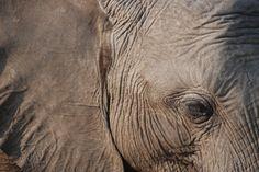 De getekende huid van een olifant in Chobe National Park. Dit gebied staat bekend om de vele olifanten; met zo'n 50.000 stuks de grootste concentratie van Afrika. Door communitylid Lerpje - NG ReisCommunity © Upload zelf je mooiste tip op www.nationalgeographic.nl/reizen/tips/toevoegen