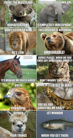 """FUNNY ANIMAL """"QUOTES""""~ Students will enjoy the word play!"""