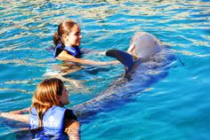 Nadar con delfines en Cancún y Riviera Maya