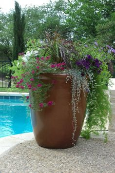 Large Planters On Pinterest Planters Gardens And