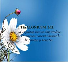 Catio, Bible Verses, Orice, Bible, Scripture Verses, Bible Scripture Quotes, Bible Scriptures, Scriptures