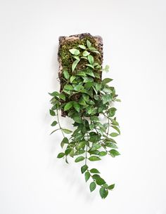 Epiphytic Wall Plaque