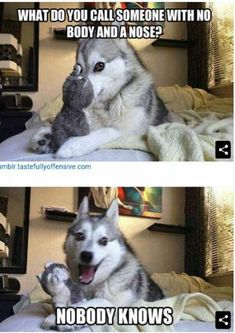 Funnies - Funny Husky Meme - Funny Husky Quote - The post Funnies appeared first on Gag Dad. Funnies - Funny Husky Meme - Funny Husky Quote - The post Funnies appeared first on Gag Dad. Cheesy Jokes, Corny Jokes, Funny Jokes To Tell, Stupid Funny Memes, Funny Puns, Funny Relatable Memes, Puns Jokes, Hilarious, Funny Humor