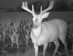 trail cameras are just one of the many tools used for property management