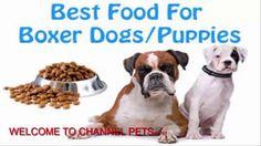 Dog Food Secrets Free Download - Dog Food Secrets Reviews