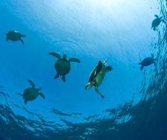 Green Sea Turtle Migration, Costa Rica - World's Great Animal Migrations | Travel + Leisure