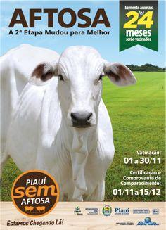 Cartaz - Campanha Contra a Febre Aftosa (2ª Etapa 2017) - Cliente Governo do Piauí / ADAPI Portfolio, Cow, Animals, Campaign, Poster, Animales, Animaux, Animal Memes, Animal