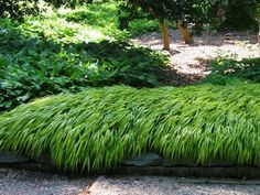 Future Plants by Randy Stewart: Japanese Forest Grass