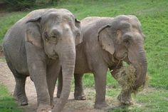 Debbie & Ronnie at Elephant Sanctuary in Tennessee