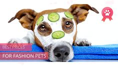Do you love your pet business? Create astonishing videos for your business using one of our templates