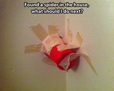 How To Properly React When You See A Spider