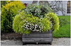 This Pro Tip Will Save You Money on Your Container Garden