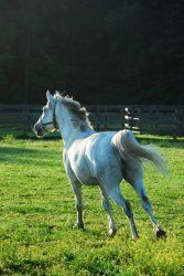 Silver Gem is an adoptable Quarterhorse Horse in Allentown, NJ. ADOPTION SPECIAL: Silver Gem comes with his own leather halter and nameplate! Complete a successful 60 day trial period and you'll also ...
