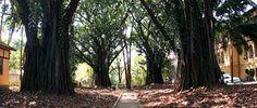 O Parque Doutor Fernando Costa, conhecido como Parque da Água Branca, é um ótimo lugar para fazer uma caminhada, um passeio a dois, ler um livro, espairecer, fazer um piquenique, ou para tomar um café típico do interior ao som de moda de viola. Foto: Caio Pimenta/SPTuris.