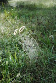 """Spiderweb,"" by Susan Rose Lea."