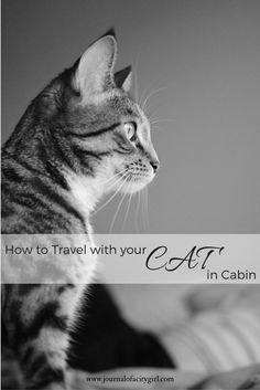 How to travel with your cat in airplane cabin. Whether relocating or taking your pet on vacation, this is everything you need to know about taking them with you.