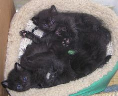 From the Archives: Puzzle Kittens, 2007
