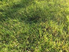 Was ist bei der richtigen Rasenpflege zu beachten? Wir haben 5 Tipps für eine umfassende Pflege für einen dichten und grünen Rasen zusammengestellt.