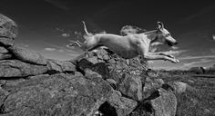 DPOTY 2011 - Dogs at Work Runner Up | Flickr - Photo Sharing!