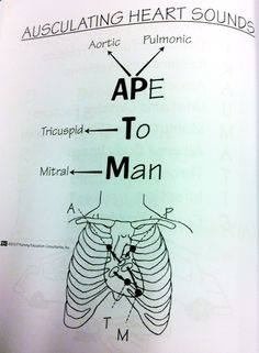 "rightatrium: """" Here is an oldie but a goodie - APE TO MAN, for auscultating heart sounds. Nursing Assessment, Cardiac Nursing, Nursing Mnemonics, Nursing School Notes, Nursing Schools, Rn School, School Humor, Medical School, Heart Sounds"