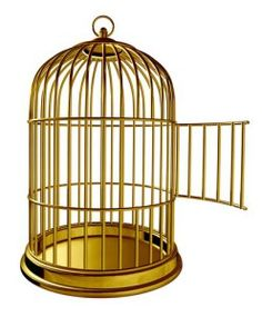Where to Find Cheap Bird Cages for Sale