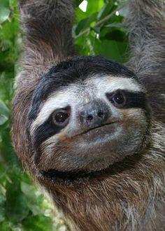 Costa Rica. Sloth Sanctuary.