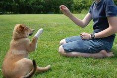 Enseñar al cachorro a dar la pata
