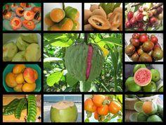 frutas.... EL SALVADOR (zapotes, nísperos, marañon japones, mangos, anonas, jocotes, guayabas, paternas, cocos, marañones ..