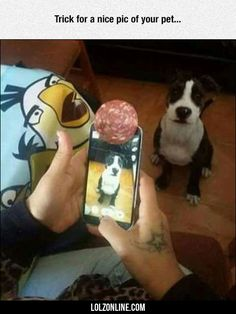 Trick For A Nice Pic Of Your Pet... #lol #haha #funny
