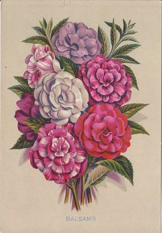 5 3/4 x 8 1/2 inch large floral trade card for Tea Co. This 1880's card ti  3629