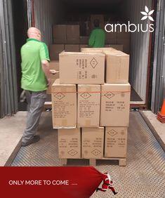 The most wonderful time of the year…  De tweede volle container is ook een feit! De container vol kerstdecoraties is vanochtend uitgeladen. Het magazijn begint steeds meer in de kerstsferen te komen, waarbij de planten tijdelijk even ruimte maken voor de kerstgekte !  . . Bekijk ook ons ruime aanbod op de vernieuwde webshop: www.kerstleverancier.nl en bestel eenvoudig en snel uw kerstdecoraties.  . . . #ambius #kerstdecoraties #sfeerbeleving #kerstgekte #kerst #sfeer #beleving…