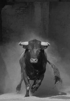 TORO!!! Just let them be angry...let them tire themselves out...it's your best defense!
